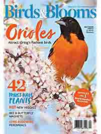 promo on subscriptions to top print & digital magazines by Amazon